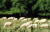 LGH043,  Azienda agricola in Langa