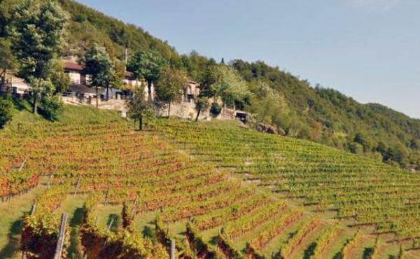 azienda vitivinicola (2)