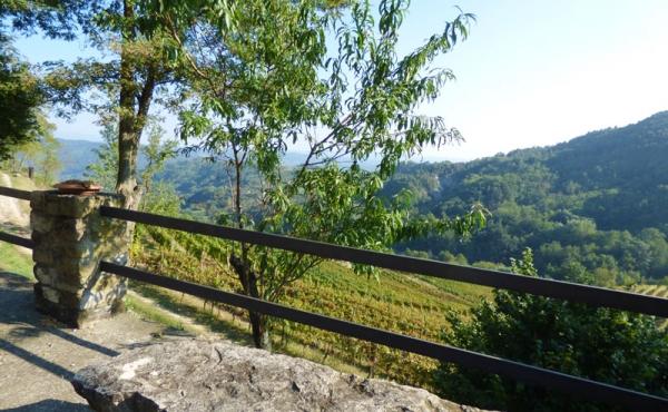 azienda vitivinicola (3)