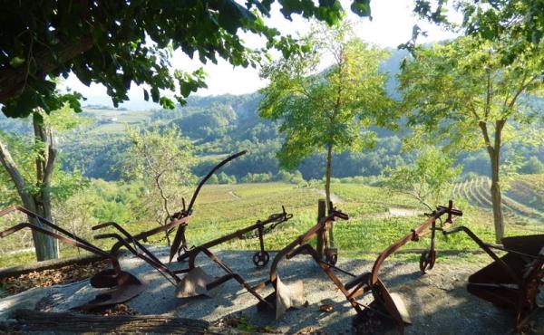azienda vitivinicola (9)
