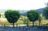 azienda vitivinicola (38)