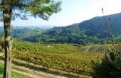 azienda vitivinicola (4)