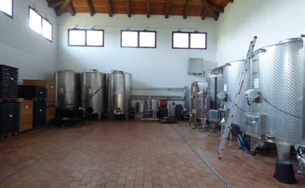 azienda vitivinicola vendita alba (15)