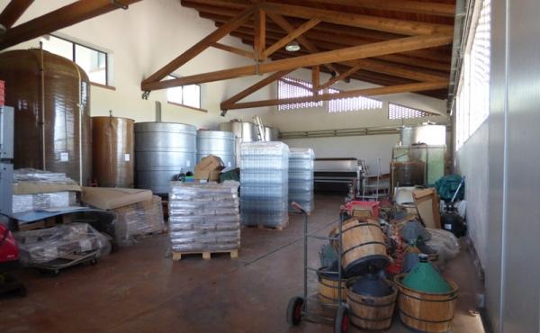 azienda vitivinicola vendita alba (16)