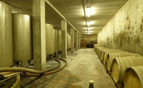 azienda vitivinicola vendita alba (21)