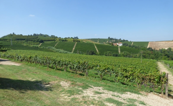 azienda vitivinicola vendita alba (35)