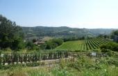 azienda vitivinicola vendita alba (30)