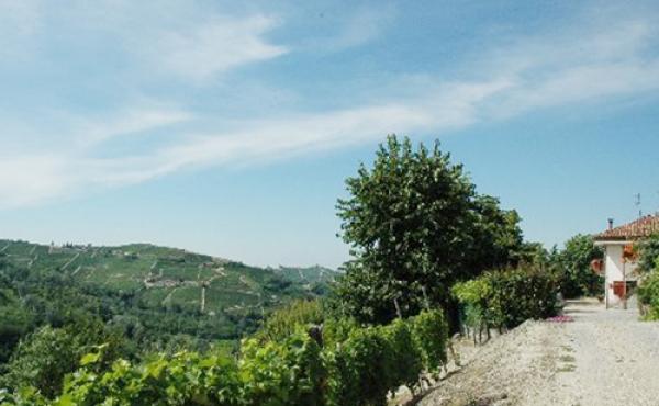 casscina langhe (2)