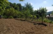 Villa con giardino (4)