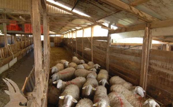 azienda-agricola-vendita-langhe-(24)