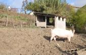 azienda-agricola-vendita-langhe-(10)