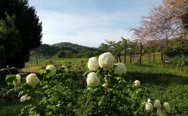 azienda agricola vendita monferrato (53)