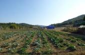 azienda agricola vendita monferrato (59)